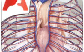 Pocket Anatomy Circulatorio